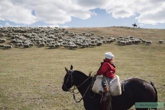Liefde voor biologische wol, respect voor het schaap