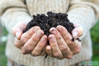 De 9 beste tips voor biologisch moestuinieren