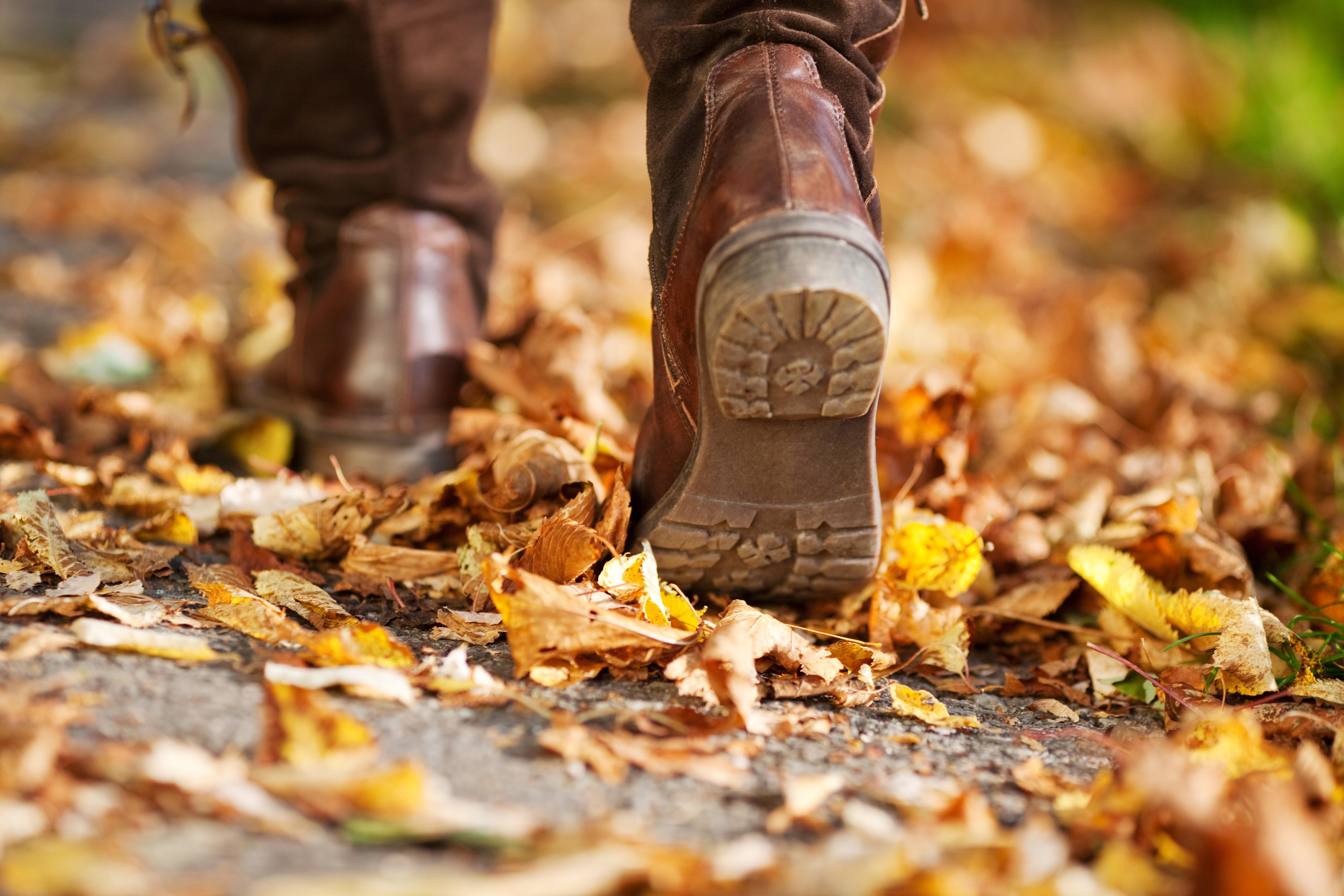 herfst-boswandeling