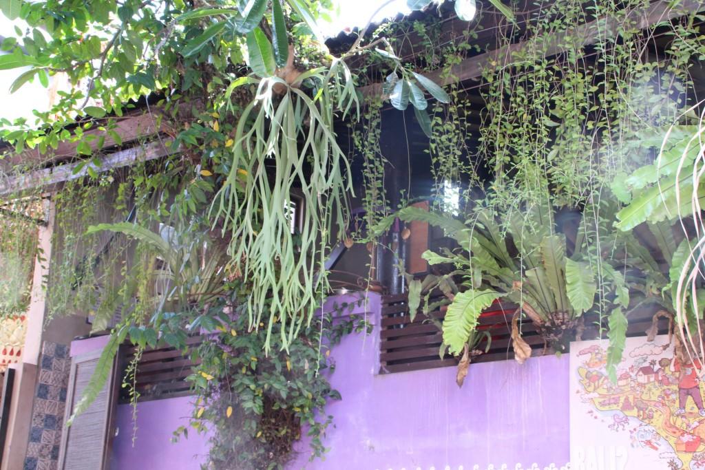 Healthy foodie paradise Ubud