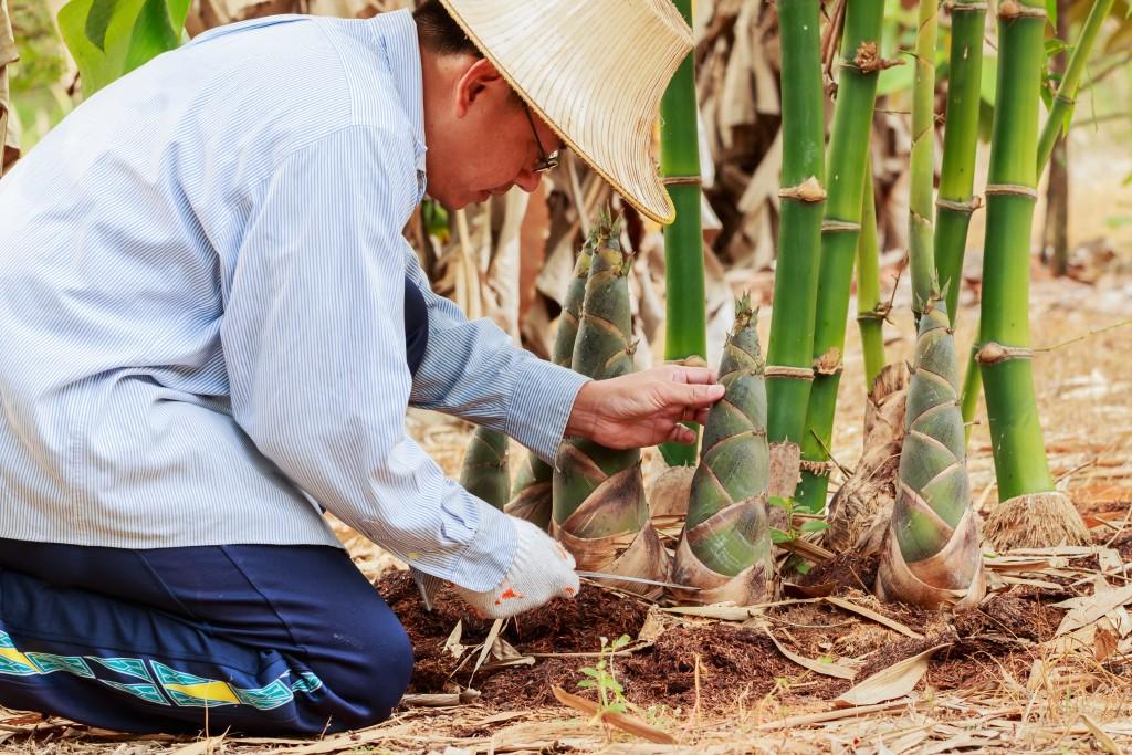 Kleding van bamboe