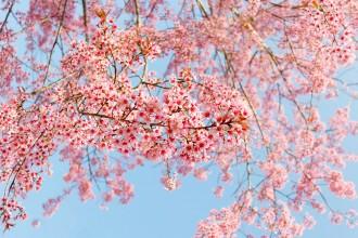 Goedkope uitjes in de lente waar je blij van wordt!