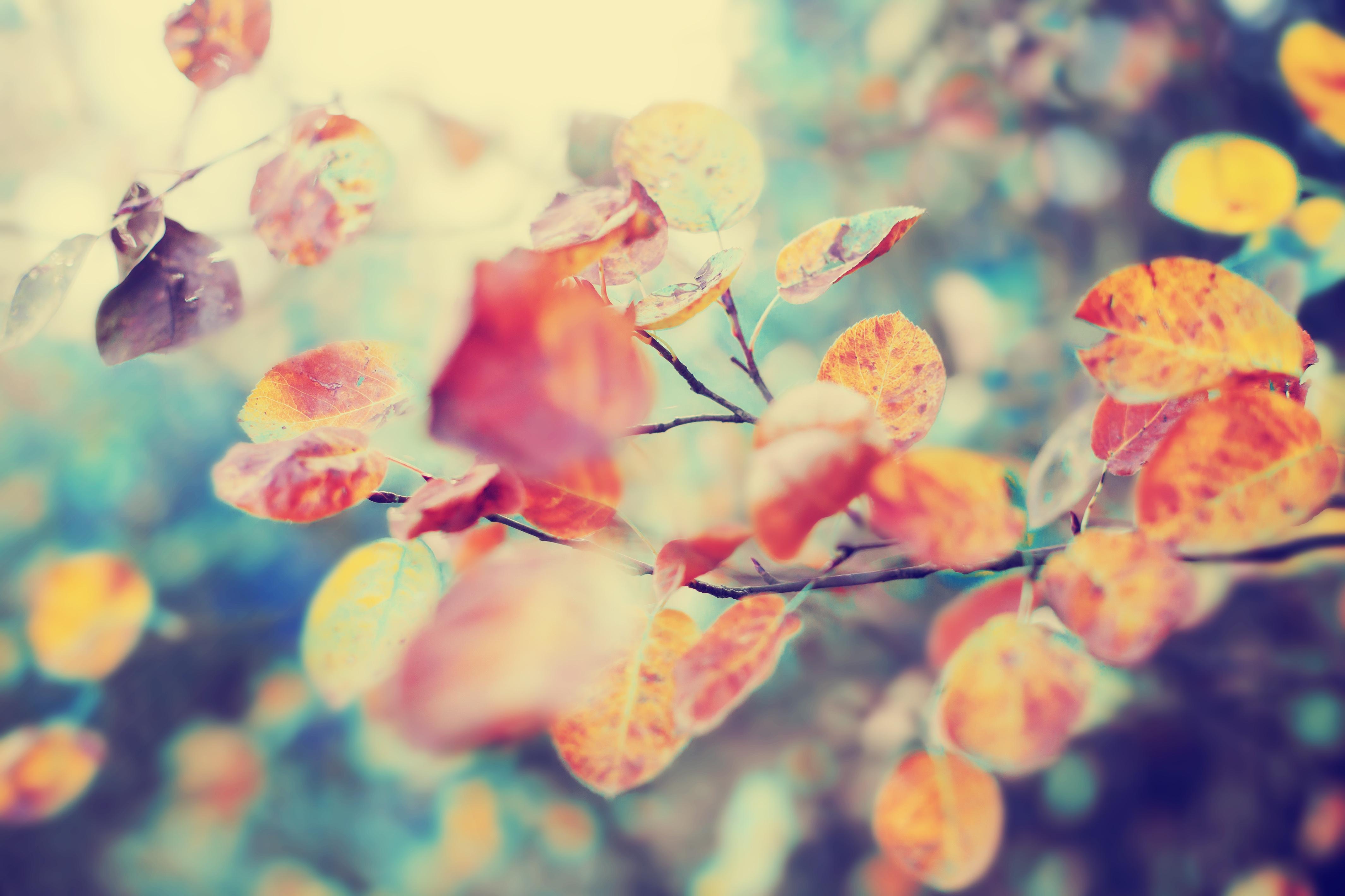 Je lichaam ondersteunen in de herfst