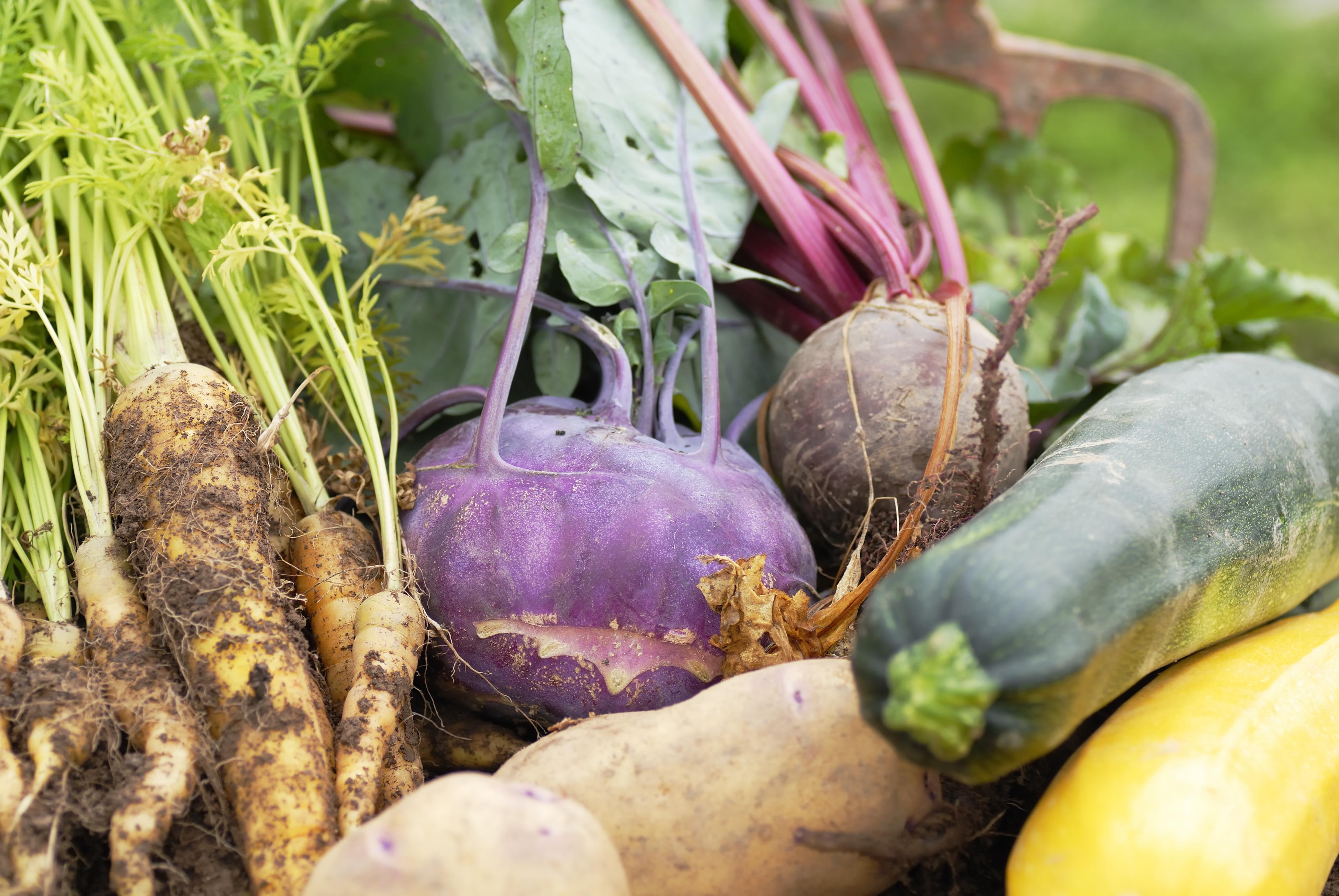 Kiezen voor groenten uit het herstseizoen is slim!