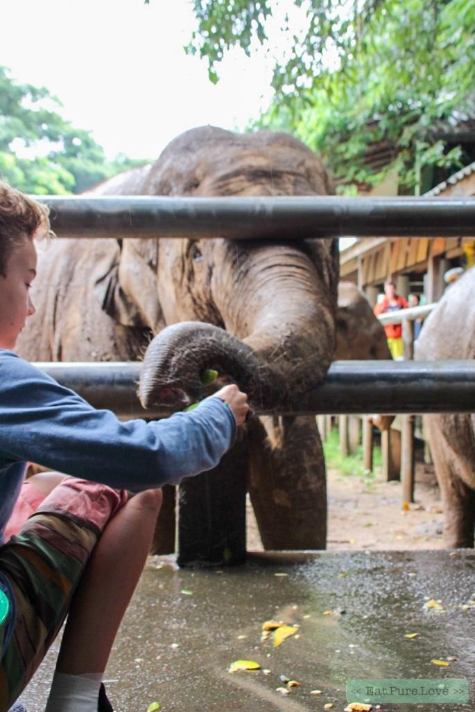 Bij Elephant Nature Park in Thailand mag je niet op een olifant zitten!