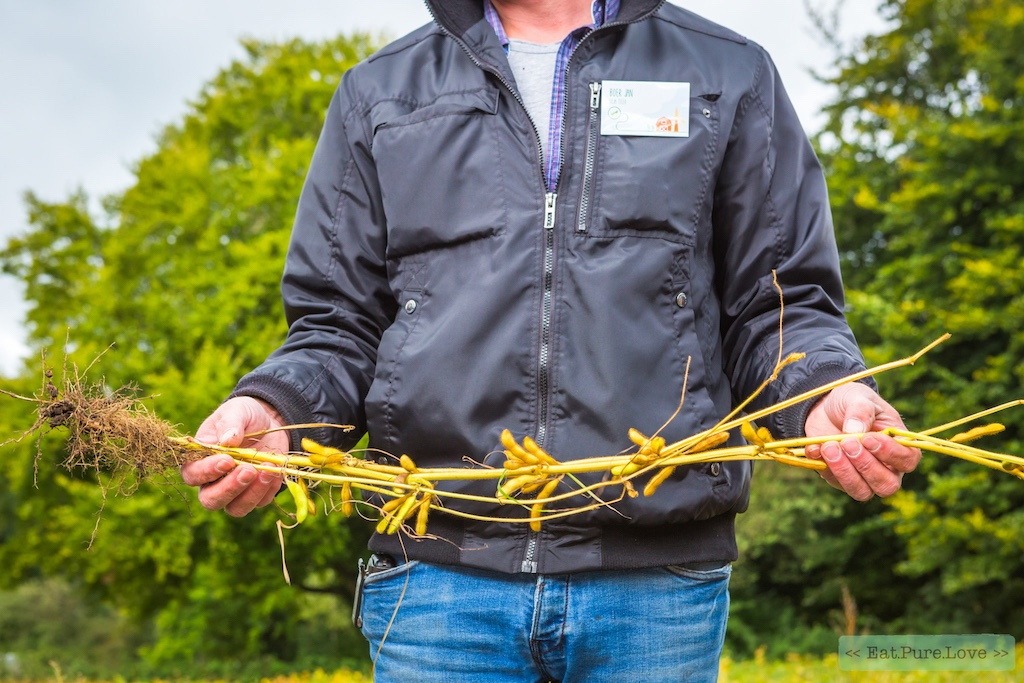 Duurzame sojabonen van Nederlandse bodem