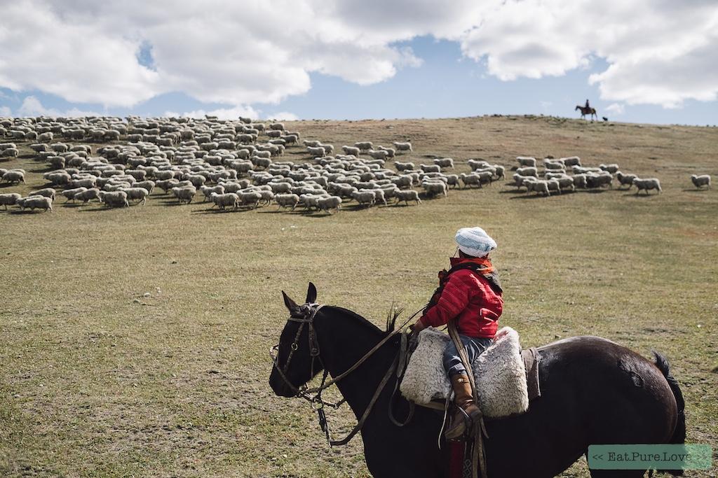 ARMEDANGELS Wool Story: Liefde voor biologische wol, respect voor het schaap