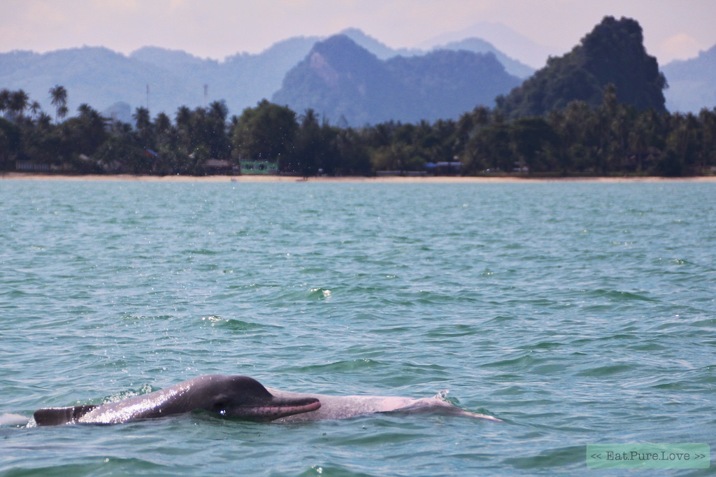 Roze dolfijnen spotten in Khanom, Thailand-8
