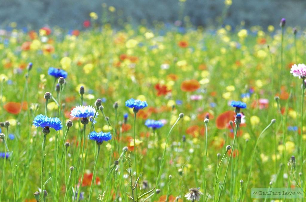 Friday Favorites #96: Veilig zonnen, mediteren op je werk en relaxed op vakantie gaan