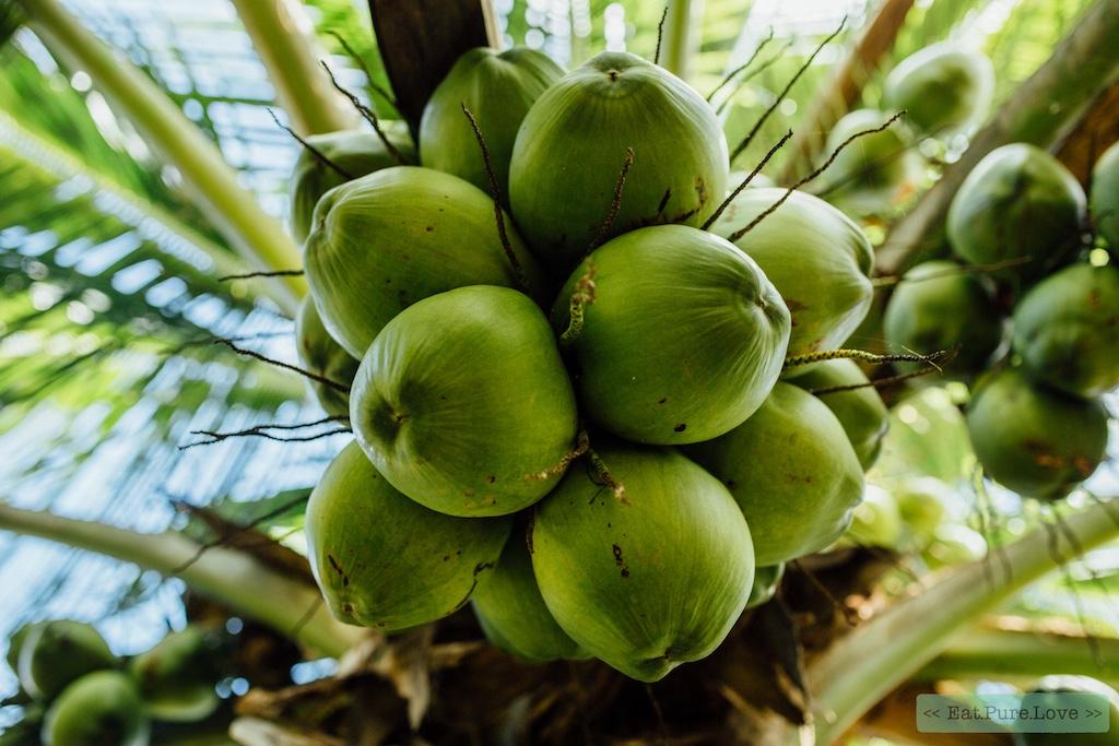 gezondheidsvoordelen van kokoswater