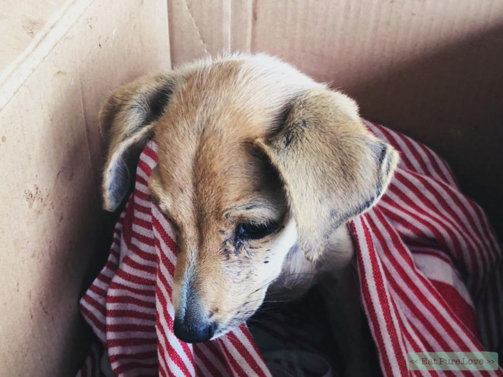 Dezwerfhondenvan Sri Lanka (en hoe jij ze kunt helpen)