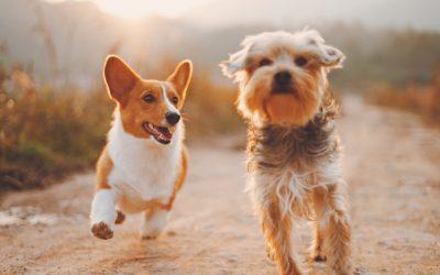 Hondenbezitter en duurzaam doen? Zo verklein je de ecologische pootafdruk van jouw viervoeter